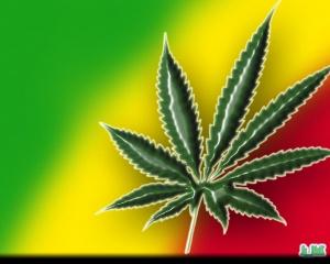 marihuana2